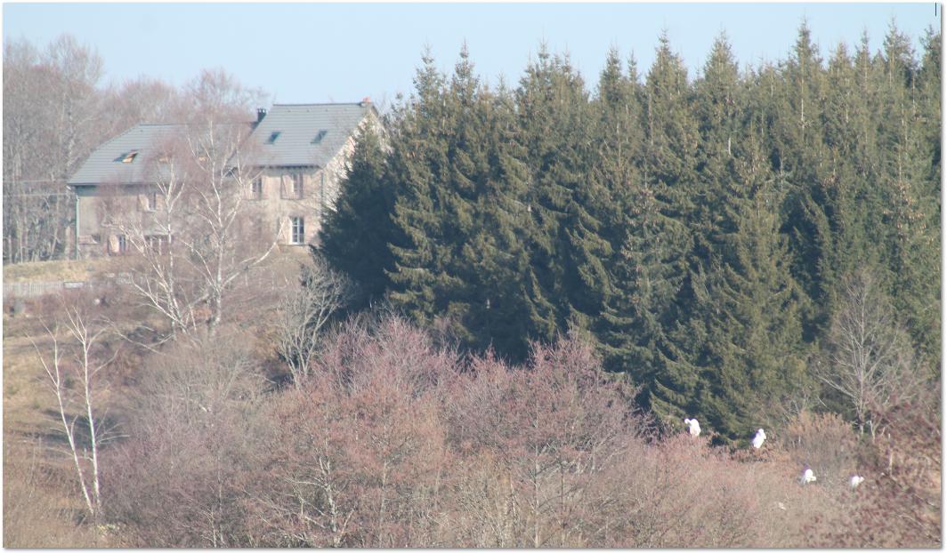 Aigrettes lac du tact hébergement cantal gite et chambres d'hôtes Auvergne les Roches d'Artense